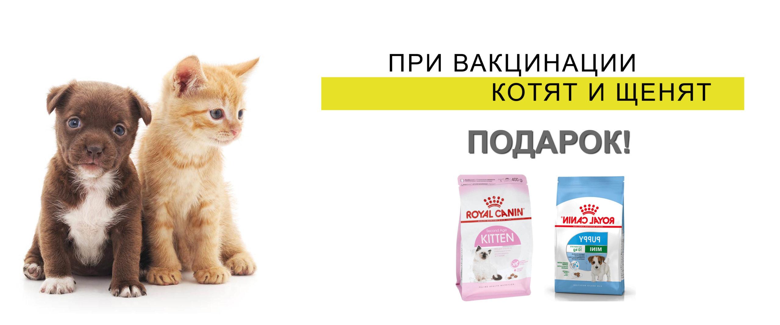 Внимание! При вакцинации и кастрации котят Подарок!