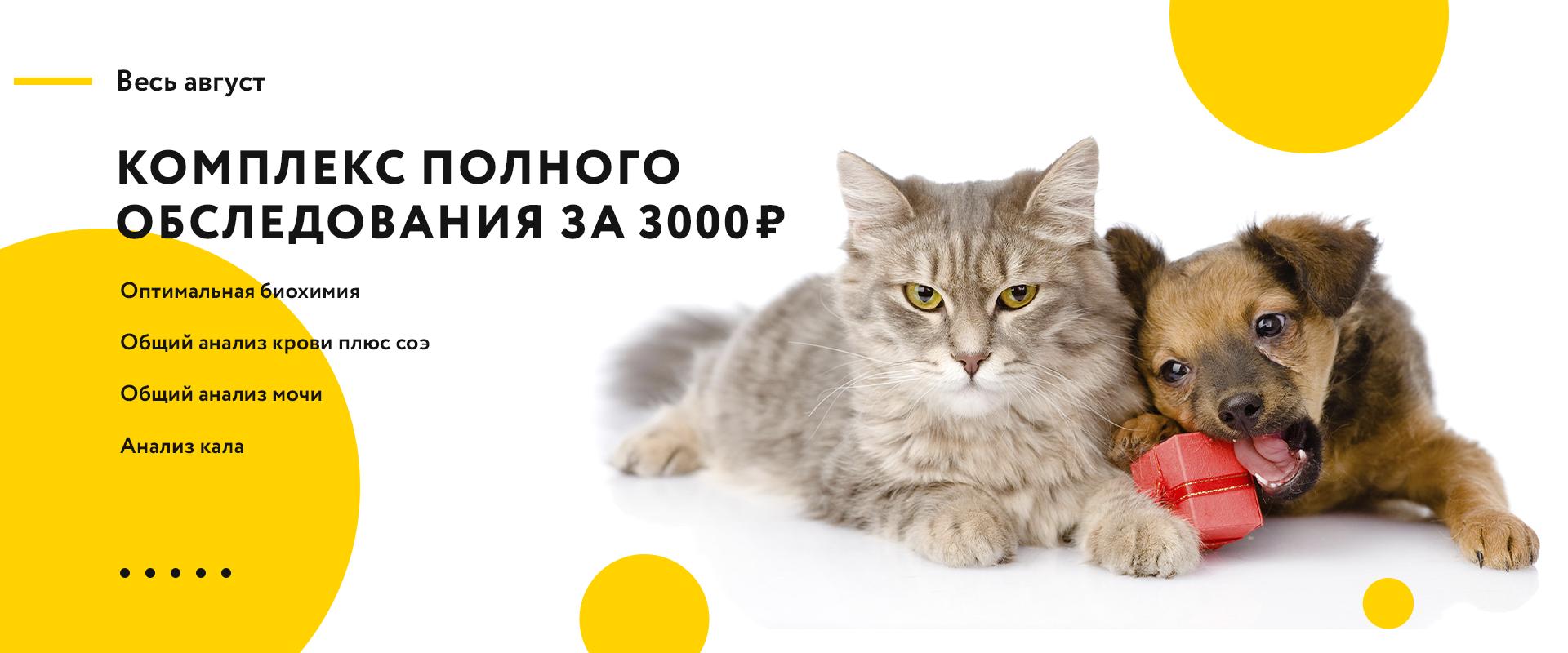 Полное обследование за 3000 рублей!